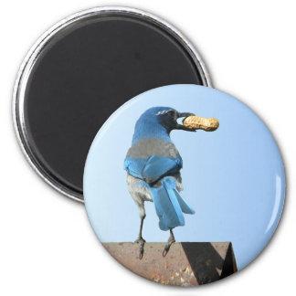 Cute Blue Jay Bird & Peanut 2 Inch Round Magnet