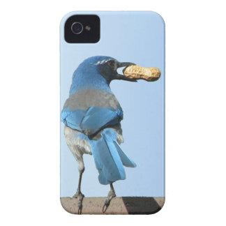 Cute Blue Jay Bird & Peanut iPhone 5 Case