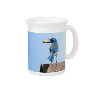 Cute Blue Jay Bird with Peanut Pitcher
