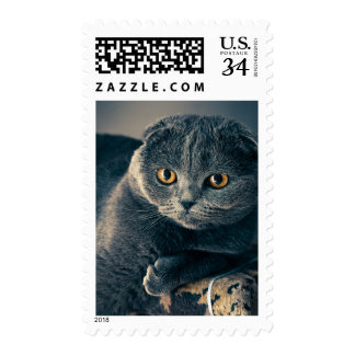 Cute Blue Scottish Fold Cat Pet Stamp