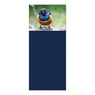 Cute Bluebird 4x9.25 Paper Invitation Card