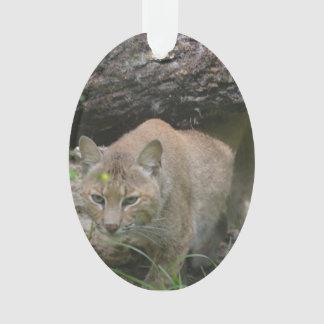 Cute Bobcat