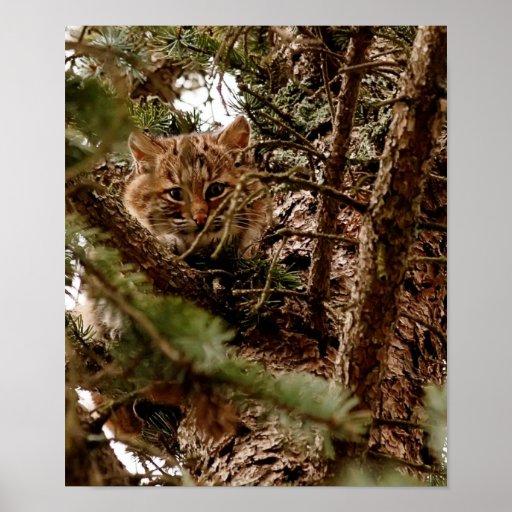 cute kitten posters