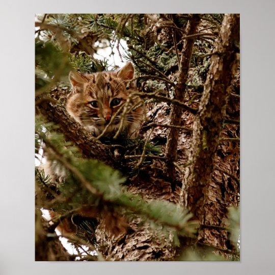 Cute Bobcat Kitten in a Tree Poster