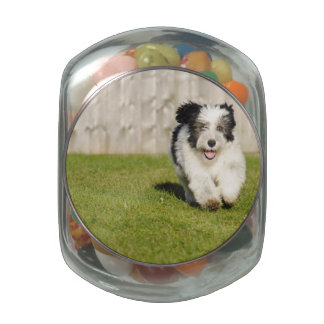 Cute Bobtail Sheepdog Glass Candy Jars