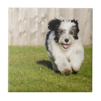 Cute Bobtail Sheepdog Tile