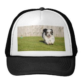 Cute Bobtail Sheepdog Trucker Hat
