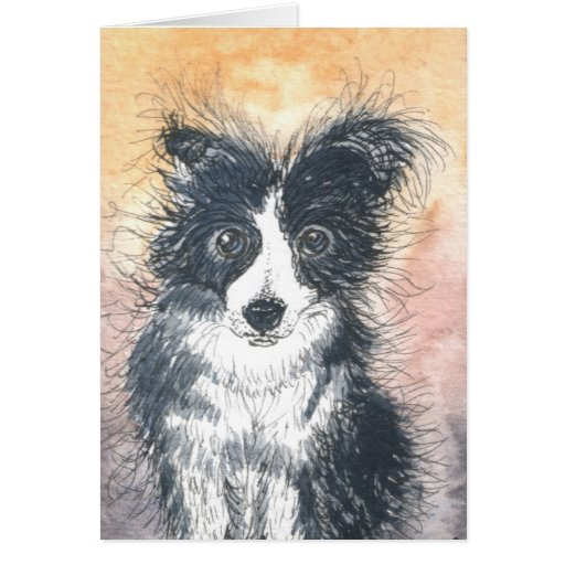 Cute Border Collie Card, For Collie Enthusiasts!