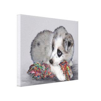 cute border collie puppy canvas print