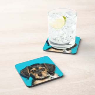 Cute Borkie Puppy Coaster