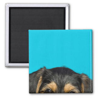Cute Borkie Puppy Magnet