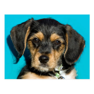 Cute Borkie Puppy Postcard