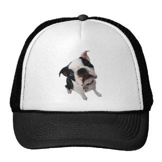 Cute boston terrier dog plain trucker hat