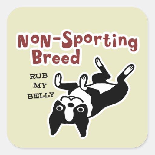 Cute Boston Terrier - Non-Sporting Breed Square Sticker