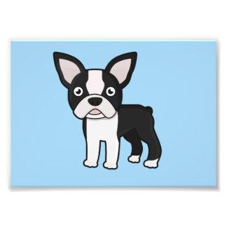 Cute Boston Terrier Photo Print