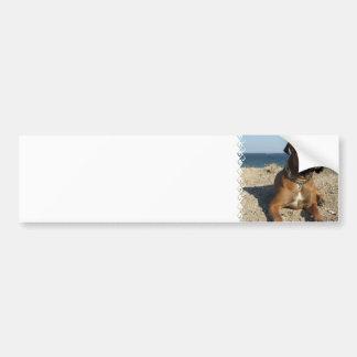 Cute Boxer Dog Bumper Sticker Car Bumper Sticker