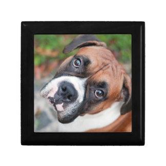 Cute boxer dog gift box