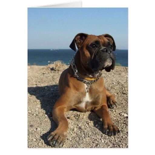 Cute Boxer Dog Greeting Card