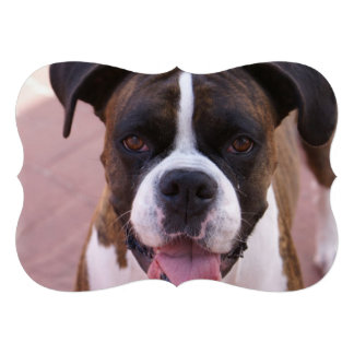 Cute Boxer Dog Announcements