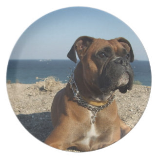 Cute Boxer Dog  Plate