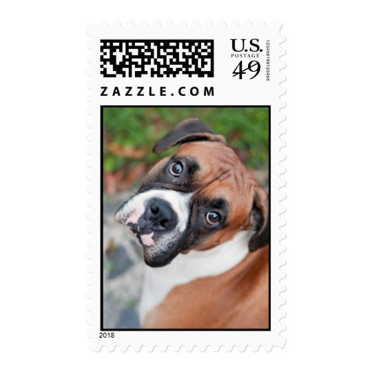 Cute boxer dog postage