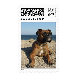 Cute Boxer Dog Postage Stamp