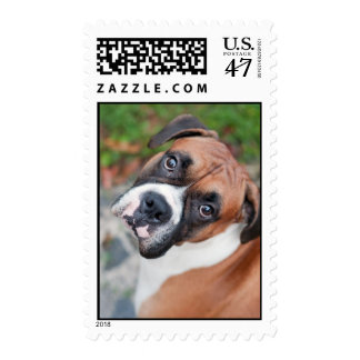 Cute boxer dog stamp