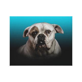 Cute Boxer Dog w Blue Black Gradient background Canvas Print