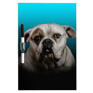 Cute Boxer Dog w Blue Black Gradient  background Dry-Erase Board