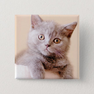 Cute British Shorthair Cat Pinback Button