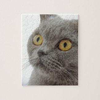 Cute British Shorthair cat Puzzle