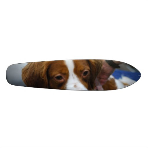 Cute Brittany Spaniel Skate Board Decks