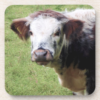 Cute Brown and White Calf Photograph Coaster