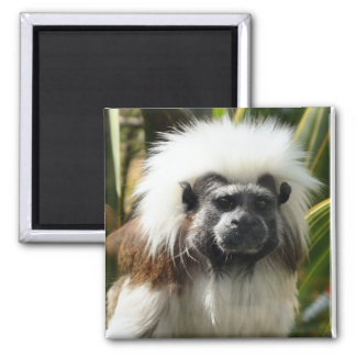 Cute brown and white monkey magnet