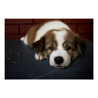 Cute Brown And White Puppy Poster