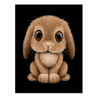 Cute Brown Baby Bunny Rabbit on Black Postcard