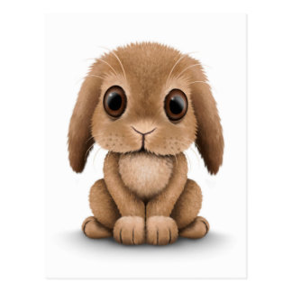 Cute Brown Baby Bunny Rabbit on White Postcard
