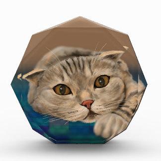 Cute Brown Furry Cat with Honey Eyes Award