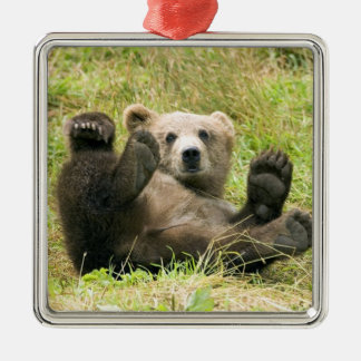 Cute brown grizzly bear cub beautiful photo, gift metal ornament