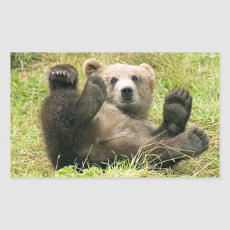 Cute brown grizzly bear cub photo, gift rectangle stickers