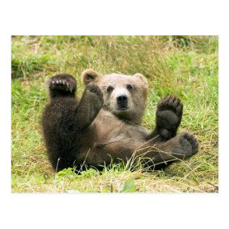 Cute brown grizzly bear cub photo postcard