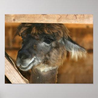 Cute Brown Llama Farm Animal Poster