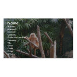 Cute Brown Monkey On The Tree Business Card Templates