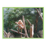 Cute Brown Monkey On The Tree Post Card