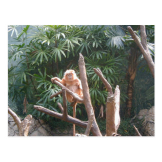 Cute Brown Monkey On The Tree Postcard