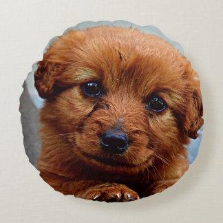 Cute brown puppy portrait round pillow