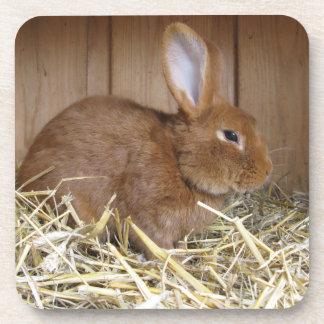 Cute Brown Rabbit in Fresh Hay Coasters
