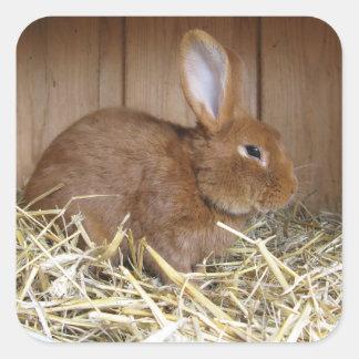 Cute Brown Rabbit in Fresh Hay Square Sticker