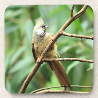 Cute Brown Speckled Mousebird Colius Striatus Beverage Coaster