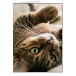 Cute Brown Spotted Bengal Cat Kitten Lying in Bed Card